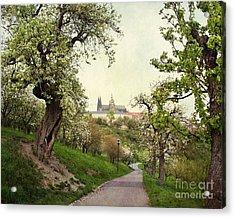 Prague In Bloom I Acrylic Print