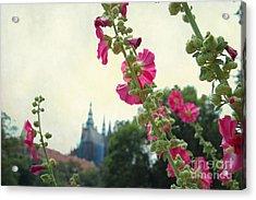 Prague In Bloom V Acrylic Print