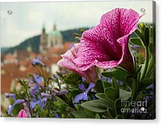 Prague In Bloom Vi - Summer Edition Acrylic Print