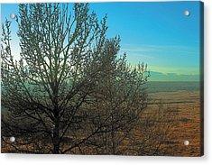 Prairie Autumn 7 Acrylic Print by Terry Reynoldson