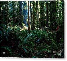 Prairie Creek Redwoods State Park 10 Acrylic Print