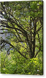Acrylic Print featuring the photograph Prairie Creek State Park by Jon Exley