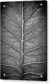 Prairie Dock Leaf Monochrome Acrylic Print by Tim Gainey