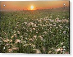 Prairie Foxtails Acrylic Print