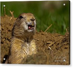 Acrylic Print featuring the photograph Prairie Lick by Dale Nelson
