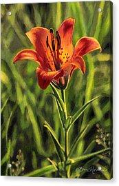 Prairie Lily Acrylic Print