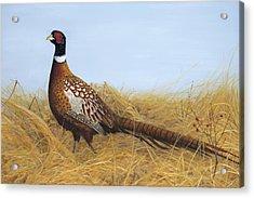 Prairie Splendor Acrylic Print