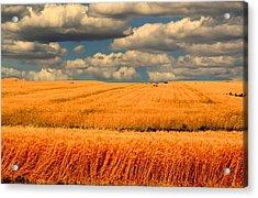 Prairie Vista Acrylic Print
