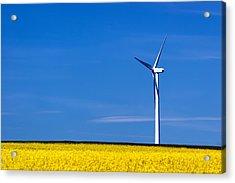 Prairie Weeds Acrylic Print