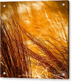 Acrylic Print featuring the photograph Prairie Winds by Catherine Fenner