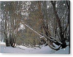 Prairie Winter 2 Acrylic Print by Terry Reynoldson
