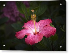Acrylic Print featuring the photograph Praise Be To God by Penny Lisowski