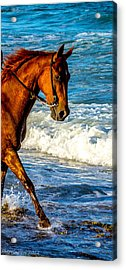 Prancing In The Sea Acrylic Print