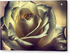 Prayer Candle Rose Acrylic Print