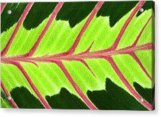 Prayer Plant Leaf Abstract Acrylic Print by Nigel Downer