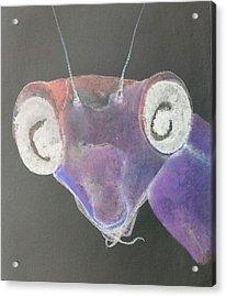 Praying Mantis In Negative Acrylic Print