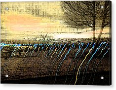 Pre Dawn Life Acrylic Print by Rich Collins