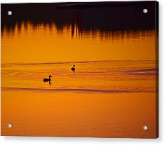 Pre Dawn Light Acrylic Print