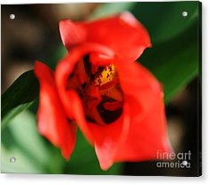 Pre-pollination  Acrylic Print by Neal Eslinger