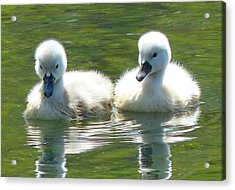 Acrylic Print featuring the photograph Precious Pair by Elaine Franklin