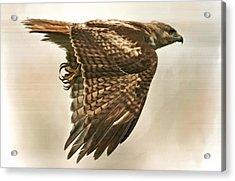 Predator Acrylic Print by Hazel Billingsley