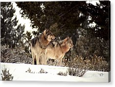 Acrylic Print featuring the photograph Predators by Sharon Elliott