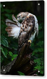 Preening Acrylic Print by Mike Farslow