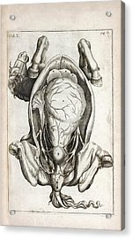 Pregnant Horse Anatomy Acrylic Print by National Library Of Medicine