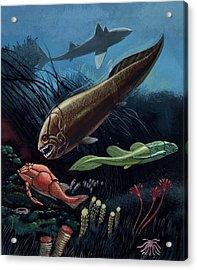 Prehistoric Fish Acrylic Print