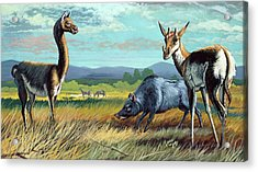 Prehistoric Mammals Acrylic Print