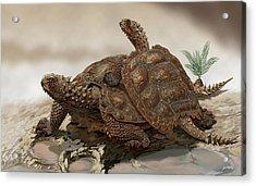 Prehistoric Turtles Acrylic Print by Jaime Chirinos/science Photo Library