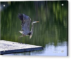 Acrylic Print featuring the photograph Preparing For Take Off by Nava Thompson
