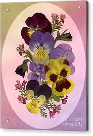 Pressed Pansies Acrylic Print