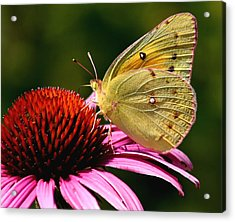 Pretty As A Butterfly Acrylic Print
