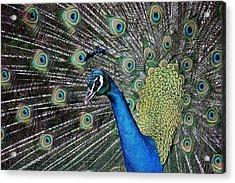 Pretty As A Peacock Acrylic Print by Paulette Thomas