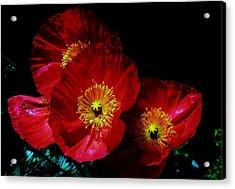Pretty As A Poppy Acrylic Print