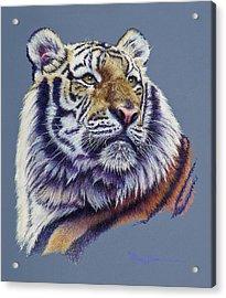 Pretty Boy Siberian Tiger Acrylic Print