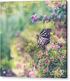 Pretty Butterfly Orange Markings Pink Flowers Green Leaves Acrylic Print