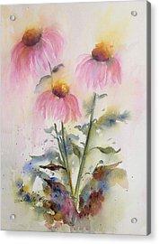 Pretty Coneflowers Acrylic Print by Bette Orr