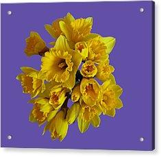 Pretty Daffodils Acrylic Print
