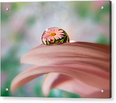Pretty Flower Drop Acrylic Print
