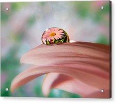 Pretty Flower Drop Acrylic Print