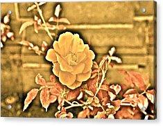 Pretty Flower Acrylic Print by Joe  Burns