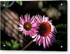 Pretty Flowers Acrylic Print by Joe Fernandez