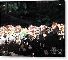 Pretty Fungus Acrylic Print by Melissa Stoudt