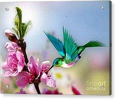 Pretty Hummingbird Acrylic Print