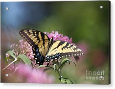 Pretty In Pink All Profits Go To Hospice Of The Calumet Area Acrylic Print