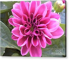 Pretty In Pink Acrylic Print by Angelia Hodges Clay