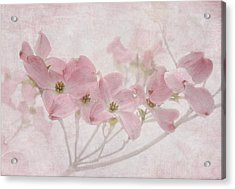 Pretty In Pink Acrylic Print by Angie Vogel
