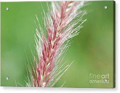 Acrylic Print featuring the photograph Pretty In Pink by Bianca Nadeau